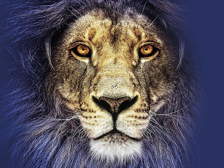 016859 A1 Henley Web Images 0009 lion2 mtime20180216105405