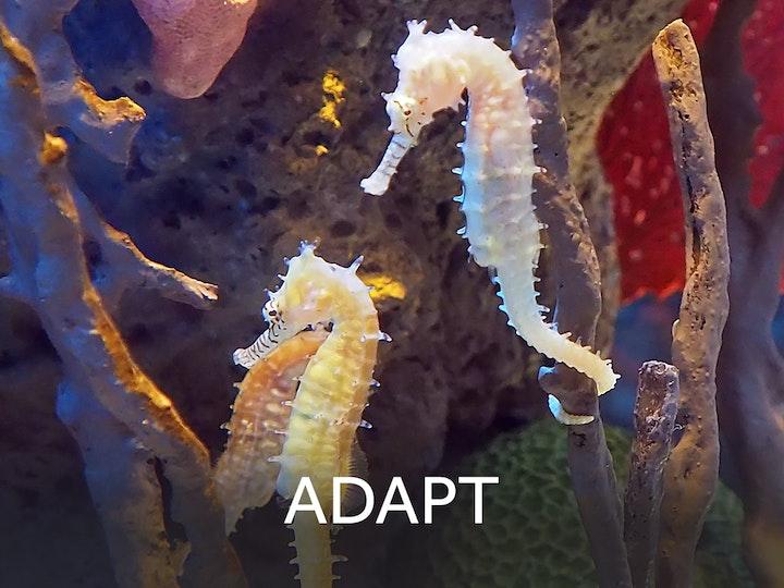 3 adapt centretext web mtime20180829141821