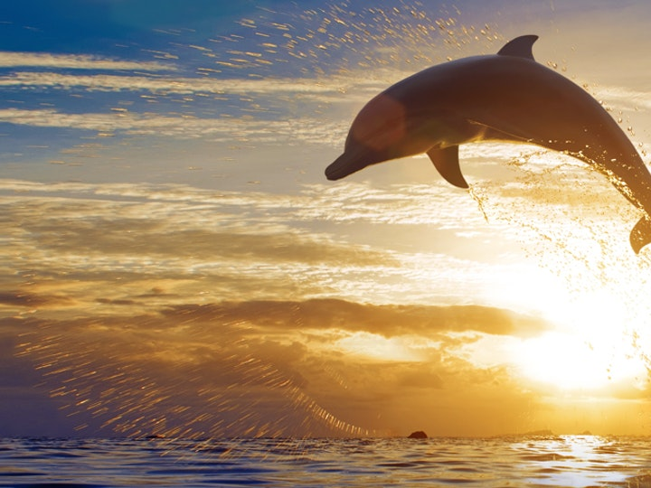 Apprenticeship Levy Asset dolphin 1200x500