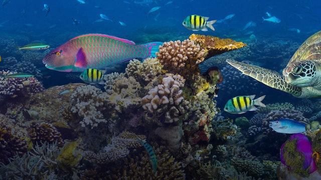 Apprenticeship Levy Asset reef 1200x500