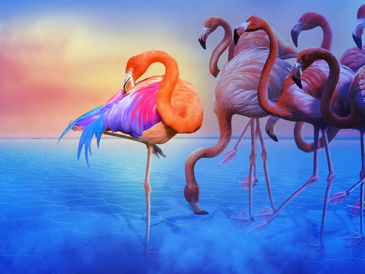 Flamingo 1 mtime20181120153028