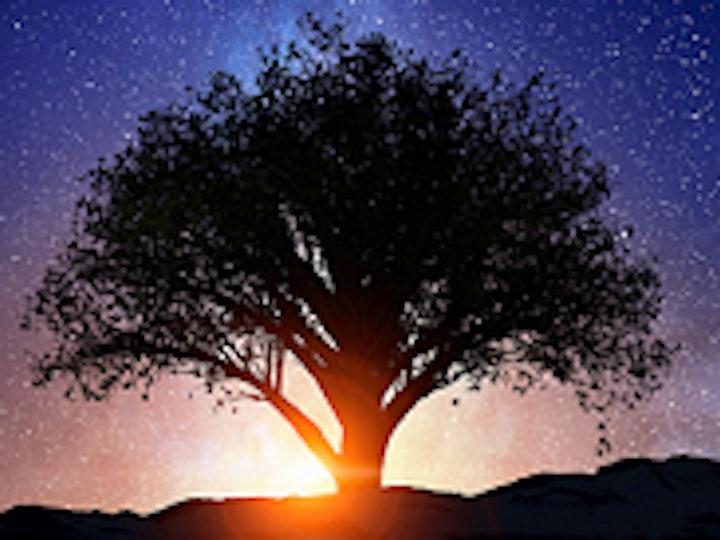 Henley Live Tree