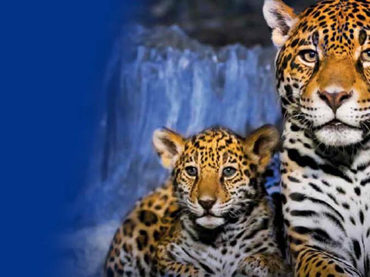 Leopards 1200x500 mtime20190322162254