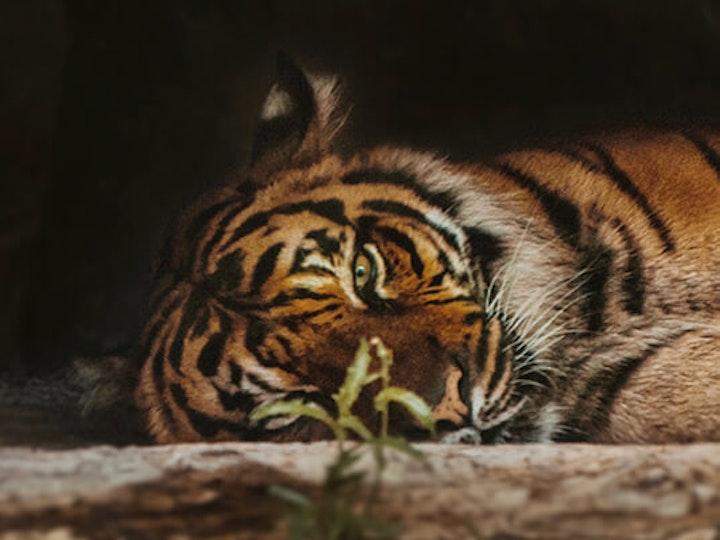 Tiger 1 mtime20200204153733