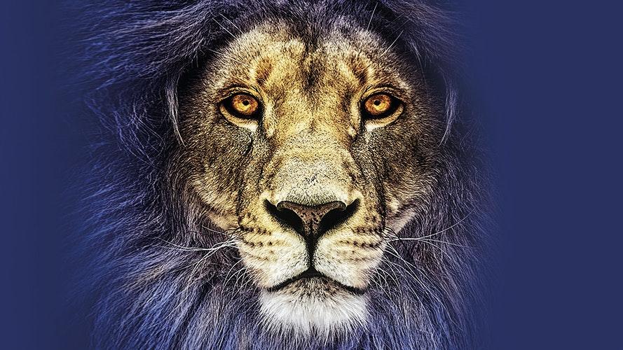 016859 A1 Henley Web Images 0009 lion2