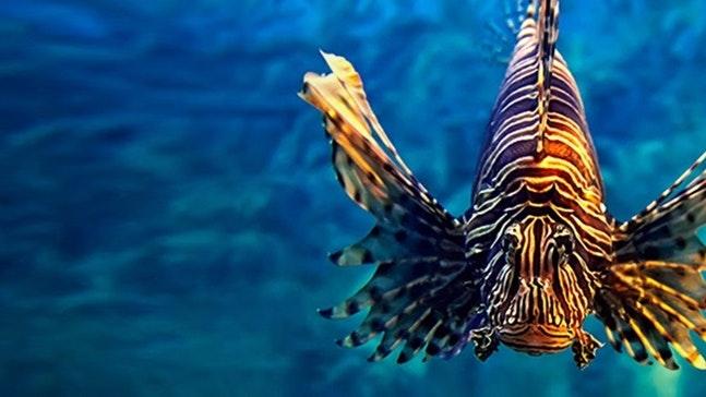 Apprenticeship Levy Asset lionfish 1200x500 V2