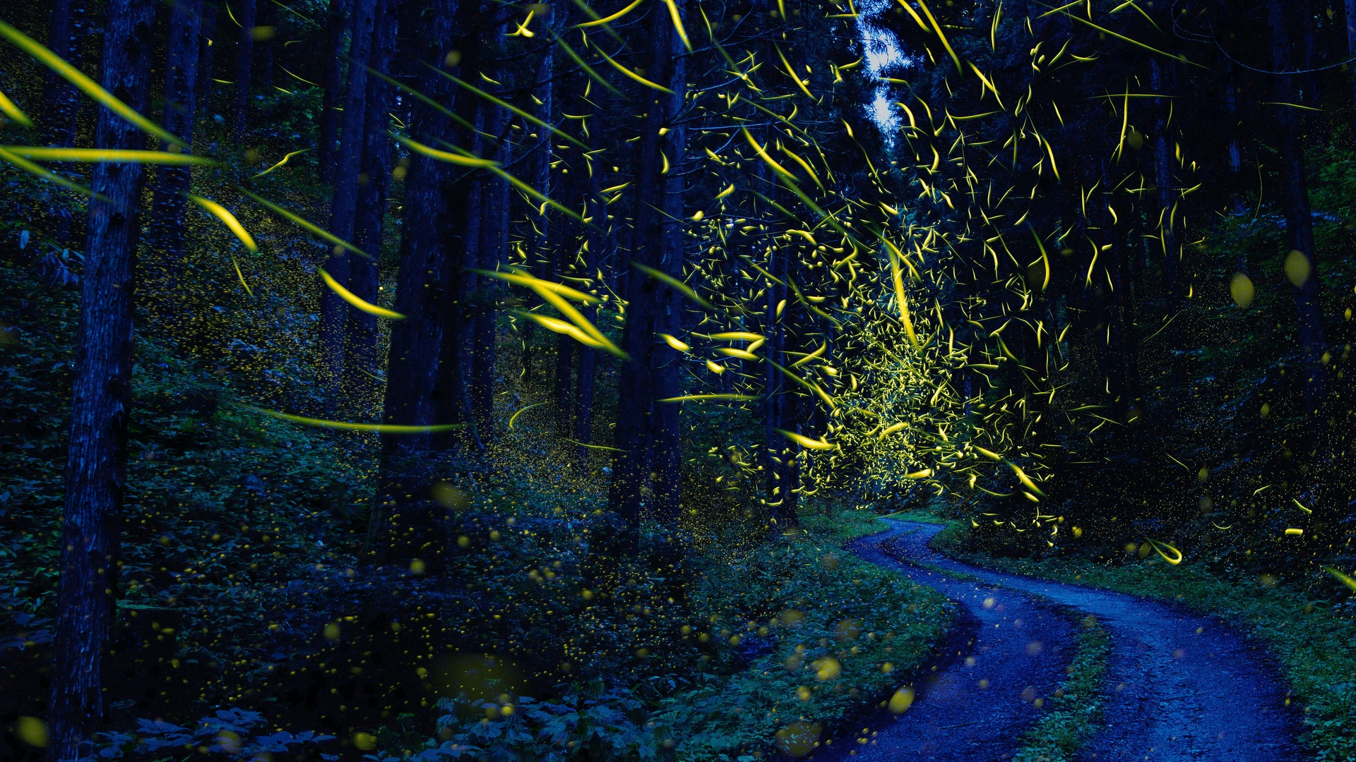 News and insights fireflies in a forest