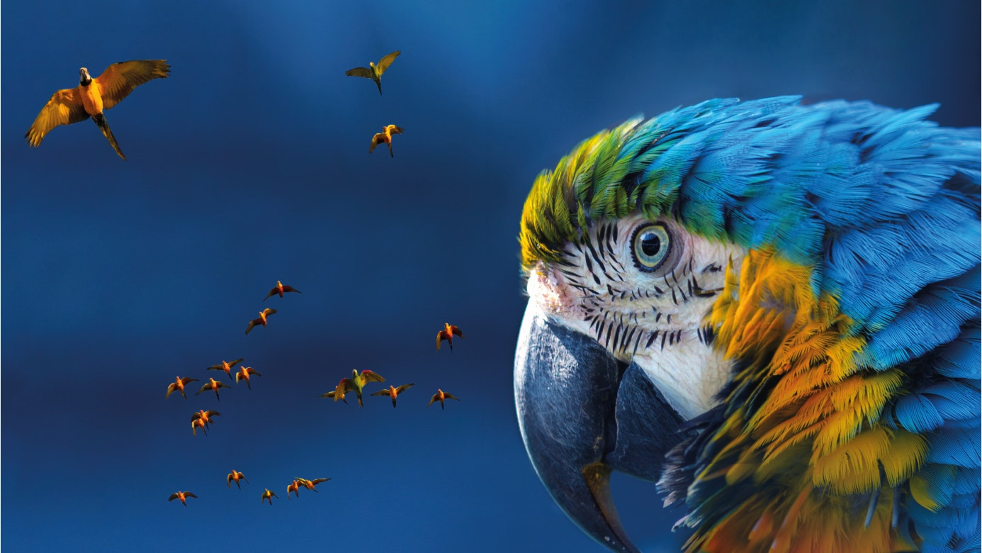 Single macaw